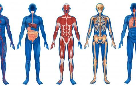 Inside the Classroom: Anatomy and Physiology