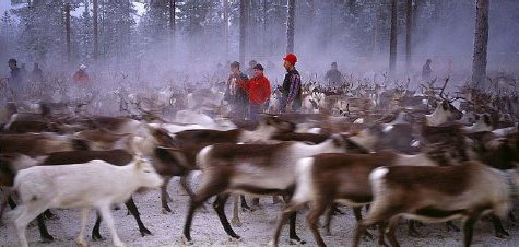 The Sami: The Reindeer Herders of the North