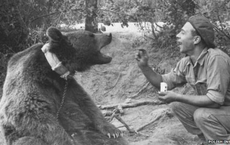 A Polish Hero: Wojtek the Bear