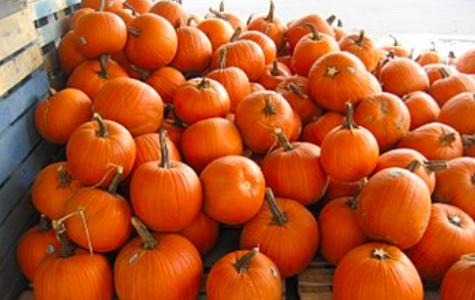 Pumpkin Rant